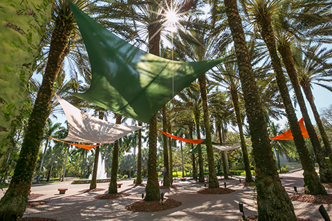 A photo of the canopies at the University of Miami Coral Gables campus.
